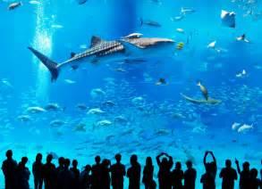 nadando con un tibur 243 n ballena biolog 237 a naukas