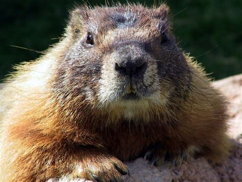 groundhog day information 10 facts to about groundhog day wbns 10tv