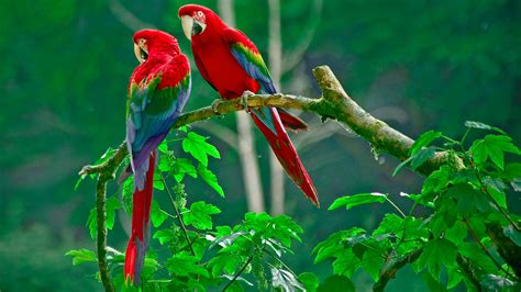 imagenes de animales exoticos documental aves exoticas loros documentales de animales