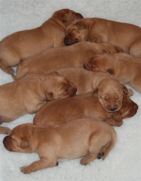 puppies week by week puppy development ages and stages a week by week guide