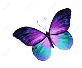 Blue butterfly flying stock photos pictures royalty free blue
