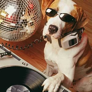 dj s dogs dogs can learn new tricks morning gratitude