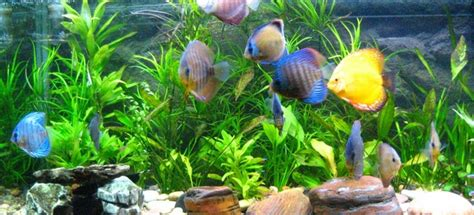 Penjernih Air Aquarium Begini Cara Mendapatkan Penjernih Air Aquarium Terbaik