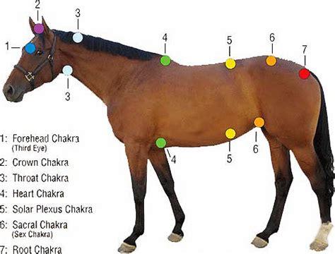equine reiki reiki  horses