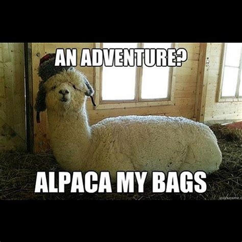 Alpaca My Bags Meme - need a laugh these animal memes should do the trick
