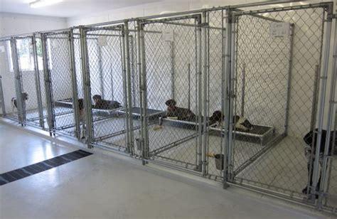 indoor kennels kurunda beds in 5 x10 indoor kennels dogs kennel ideas beds indoor
