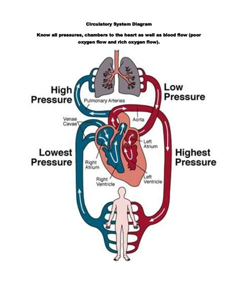 Simple Circulatory System Diagram Labeled