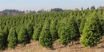 wholesale christmas trees from oregon