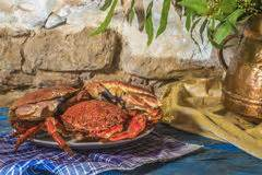 cuisiner araign馥 de mer araign 233 e de mer image stock image 26327181