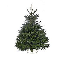 homebase real christmas trees for sale real trees for your home for sale at homebase