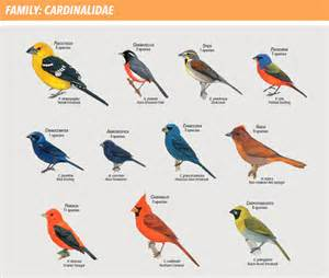 get to know your bird families with a new handbook all