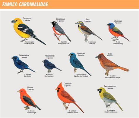 types of birds weneedfun