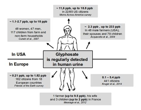 How To Detox Glyphosate From by Glyphosate In Food And Water