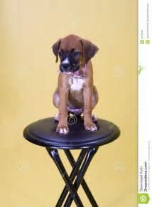 on stool royalty free stock image image 1071546