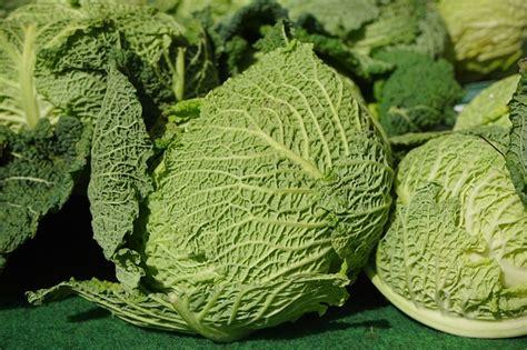 coltivare ortaggi in vaso ortaggi da coltivare in inverno idee green