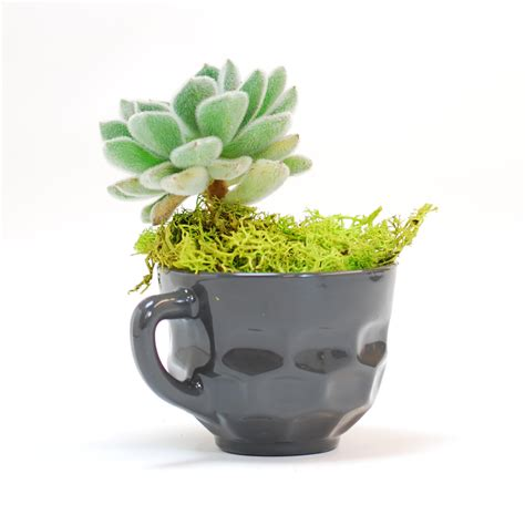 Punch Planter by Carl Grey Punch Cup Planter