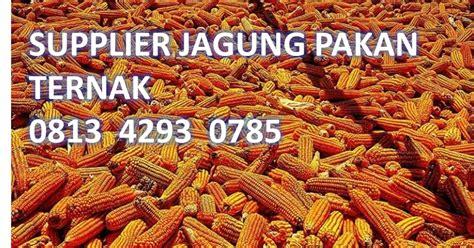 Tepung Jagung Sebagai Pakan Ternak supplier jagung pakan ternak 081342930785 supplier