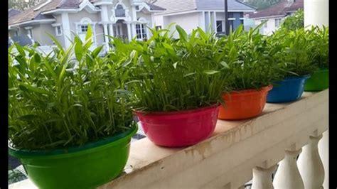 Menanam Hidroponik Rumahan | jenis tanaman hidroponik rumahan youtube
