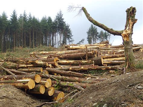 Which Biome Is Logging Hardwood Trees - a tropical rainforest climate also known as an equatori