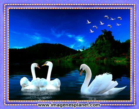 imagenes bonitas de buenas noches gif gratis imagenes hermosas de paisaje con cisnes en cuadro