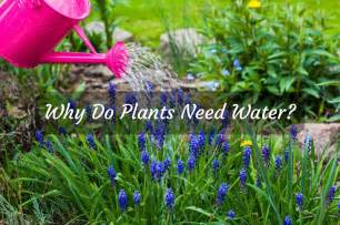 plants that don t need water why do plants need water we have answers just another