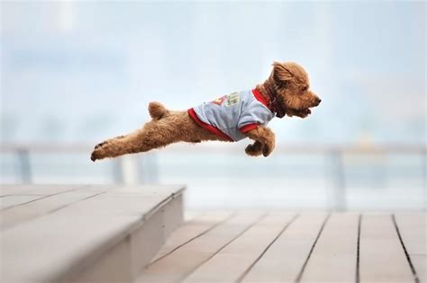 puppy jumping top 10 and amazing dogs jumping as high as they can