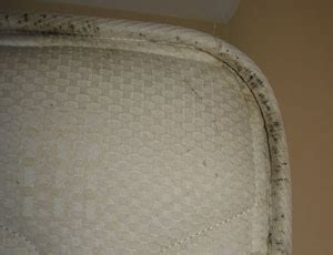 pest control  bed bugs  micropest