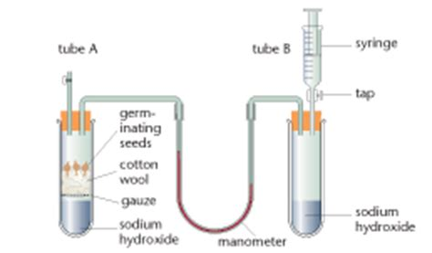 quotient design definition respiratory quotient a2 level level revision biology