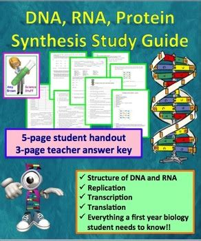 section 12 3 rna and protein synthesis answer key 28 section 12 3 rna and protein synthesis worksheet
