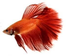 Pet Fish pet names place pet fish names