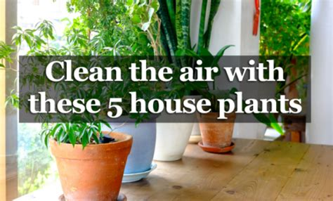 How Often To Paint House 5 houseplants that produce oxygen and are impossible to
