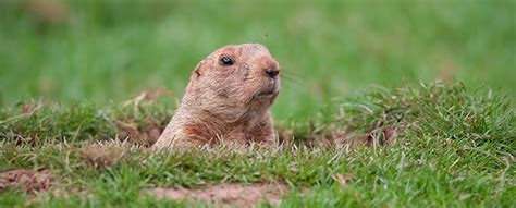 groundhog day that step groundhog day 2017 discount alb tech we fix computers
