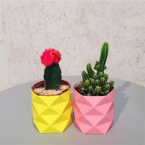 creative diy cactus planters you should not miss craft coral