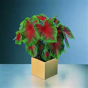 tableauvegetal le 100 tableau vegetal page 9