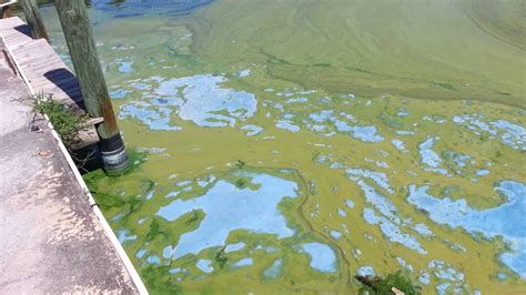 are water toxic toxic water in south florida