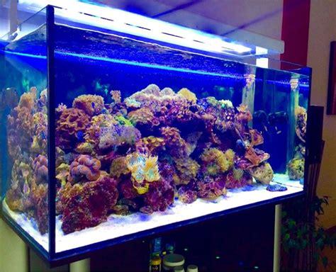 illuminazione a led acquario plafoniera acquario led acquario plafoniera per acquario