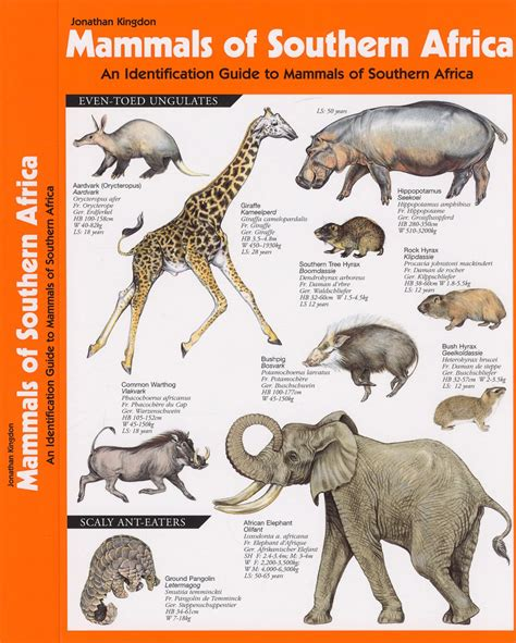 field guide to the larger mammals of africa field guides books mammals of southern africa an identification guide to