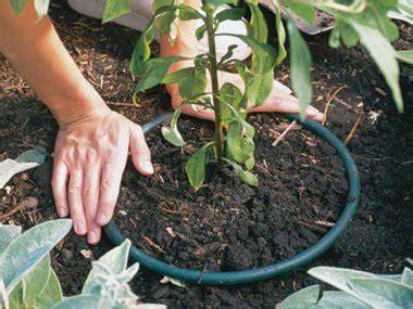flower gardening tips for beginners 10 expert gardening tips for beginners reader s digest