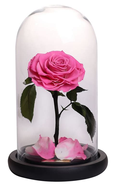 roses that last forever forever brings eternal roses to dubai savoir flair