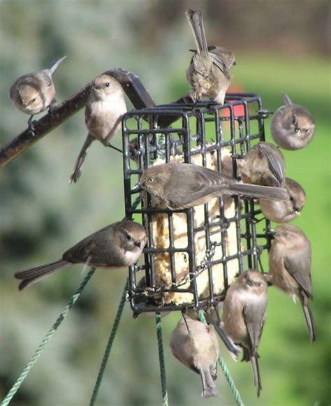 bird suet recipegreat com
