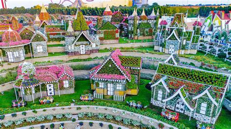 pictures dubai miracle garden  power   flower