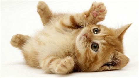 imagenes kitty jane pictures of cats a huge and cute collection
