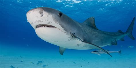 images of sharks the pros and cons of shark week if you re a shark