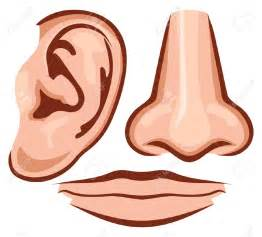 nose clipart clipartsgram