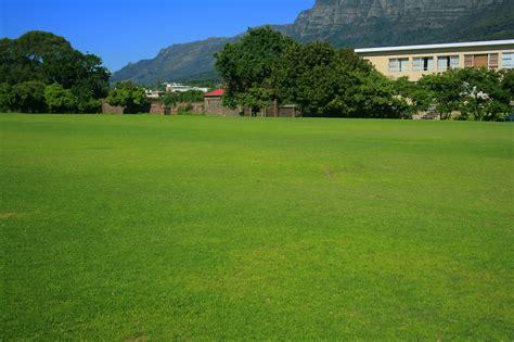 grass backyard gardening tips starke ayres