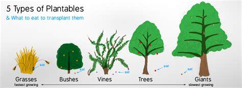 different types of trees social natural science english year 2 seneca natural