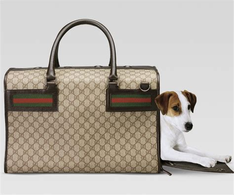 gucci carrier most wanted carriers