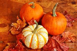 fall pumpkins and decorative squash photograph by verena
