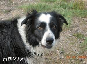 can dogs tell if your new study dogs can tell if you re untrustworthy orvis news
