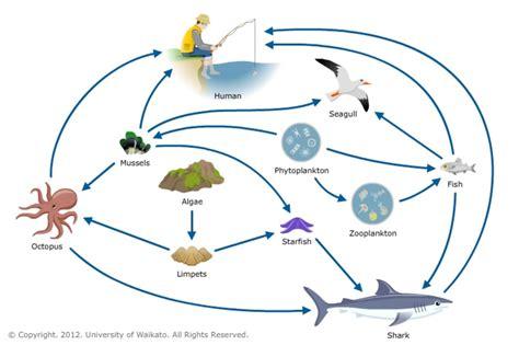 food websites marine food web science learning hub